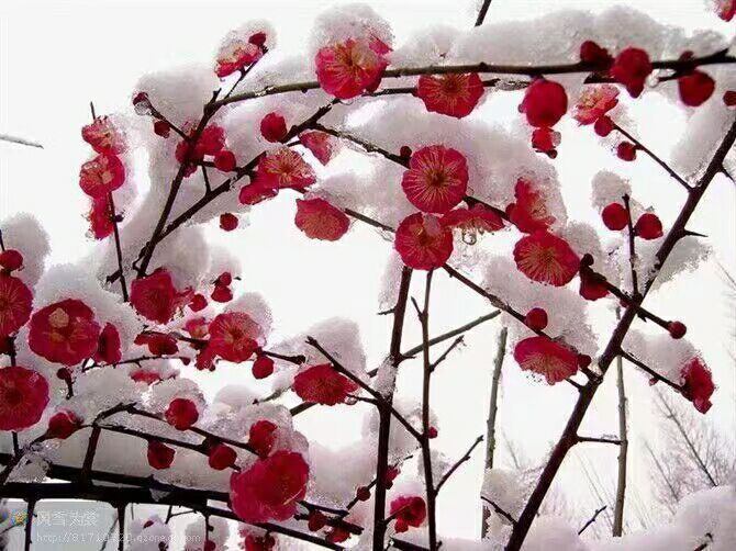 【清韵】我与冬天许下约会(诗歌)
